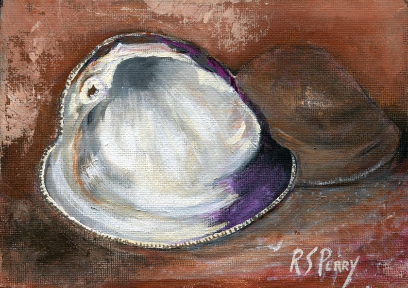 Northern Quahog clam 2.1.2020-004 (Medium)