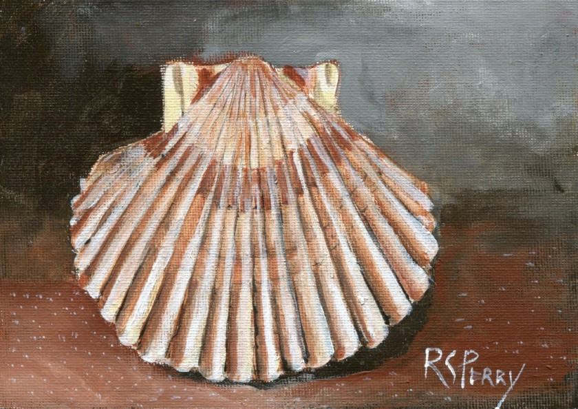 Scallop 2.1.2020-003 (Medium)