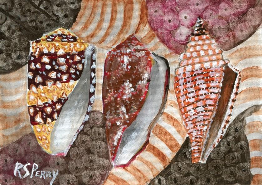 Cone Snails, Admiral Cone, Geography Cone, Orbign's Cone internet