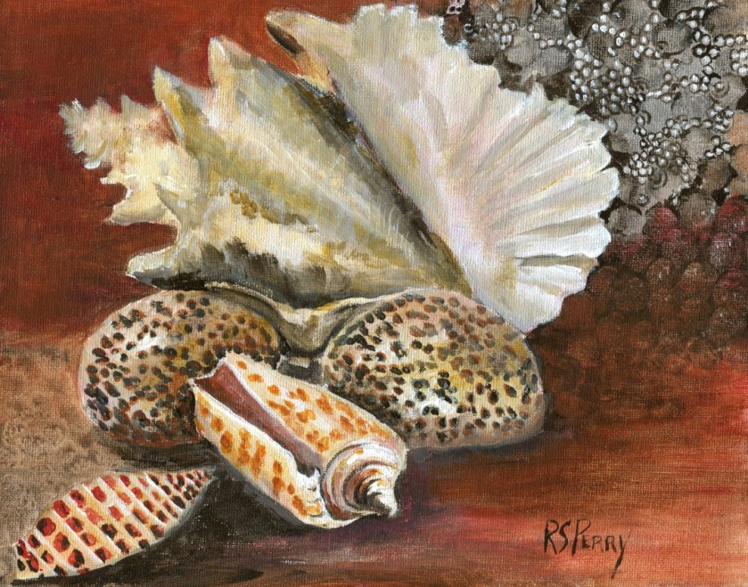 Junonia, Alphabet Cone, Tiger Cowrie, Queen Conch internet